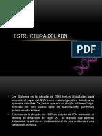 ADN estructura.pptx
