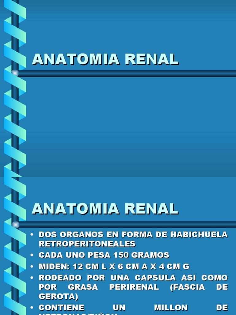 mia Fisiologia Renal
