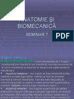 Seminar 7 Anatomie