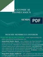 Seminar 8 Anatomie