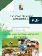 fisiologia_del_arroz.pdf