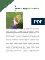 El Alga AFA