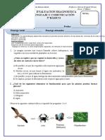 Diagnostico Ciencias Naturales 6 Basico