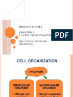 Chapter 2 - 2.2 Cell Organisation
