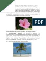 Breve Resumen Sobre La Flor de Cayena y Su Dibujo Alusivo