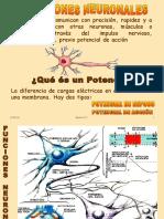 sinapsis segundos