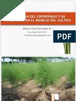 Fisiologia y Agronomia Del Esparrago