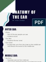 anatomy power point
