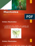 Orden manthodae- Entomologia Agricola