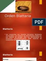 Orden Blattaria- Entomología