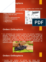 Orden Orthoptera