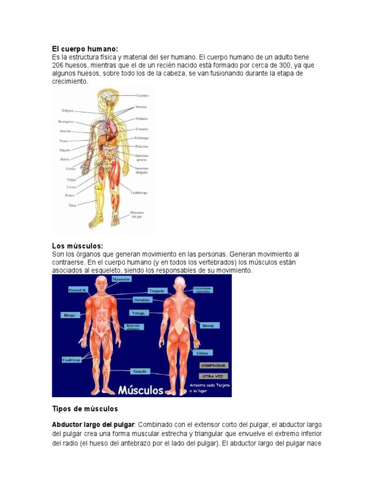 Fantástico Esqueleto Humano Con Huesos Marcados Colección - Imágenes ...