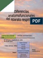 66213713 Diferencias Anatomofuncionales Entre Nino y Adulto