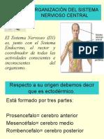 1. Organización Del Sistema Nervioso