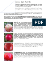 Tropical Apple Varieties