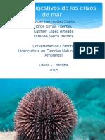 Exposición Digestión de Erizo de mar.pptx