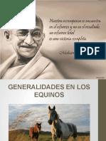 Generalidades Del Equino y Razas