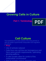 Growing PLHC1 Cells in Culture