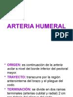Arteria Humeral 1