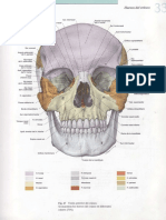 AnnexAnnex Imatges Anatomia Ossos Imatges Anatomia Ossos