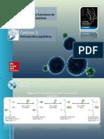 Aminoacidos Peptídicos
