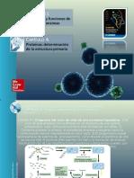 Proteínas Estructura Primaria