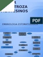 embriologia estomatologica.pptx