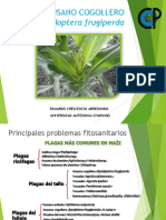 ETOLOGIA Y BIOLOGIA DE GUSANO COGOLLERO.pdf