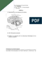 Trabajos Practicos Neurofisiologicas Del Aprendizaje