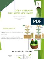 Circulación y Nutrición en Plantas Vasculares Grabacion