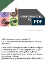 CLASE Anatomia Del Ojo
