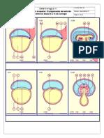 Actividad Plegamiento Embrion Para Maquetas de Acetato