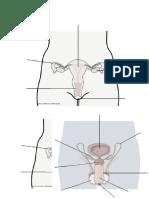 sistema reproductores 6°