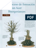 Acer Bonsai Actual 103 S.fernandes