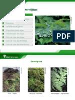 Algas Verdes Pardas e Vermelhas Briófitas e Pteridófitas - 7º ano.ppt
