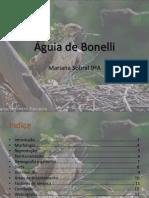 Águia Perdigueira (Bonelli)