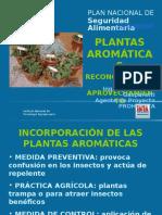 Plantas Aromaticas Cordoba