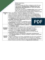 Histo - tejido conectivo