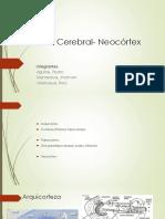 Corteza Cerebral Neocortex 1