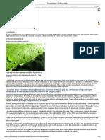 Fotossíntese — Ciência Hoje