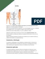 Qué Es La Anatomía