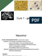 Neurologie Continuarea La Cursul 1