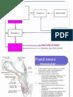 Neurologie Curs 2