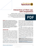 Interactions of Vibrio Spp. With Zooplankton