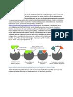 Einleitung Enzym Substrat Produkt