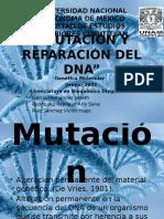 91576427 Mutaciones Causas y Mecanismos y Reparacion Del Dna Final