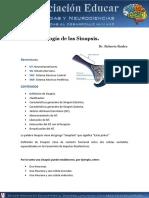 neurofisiologia-sinapsis