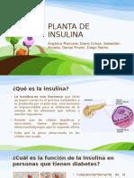 Planta de Insulina