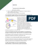 Preguntas Fosforilación Oxidativa