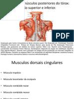 Miologia de musculos posteriores do torax.pdf
